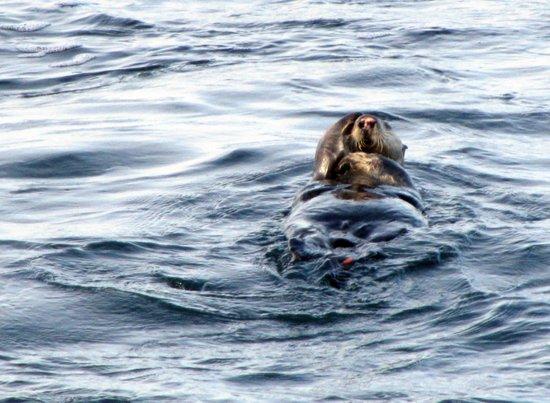 Who's Checking Who? (Sea Otter) Art Print