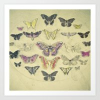 Butterflies and Moths Art Print