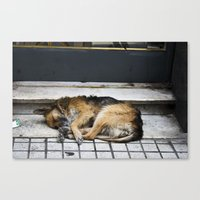 Let Sleeping Dogs Lie Canvas Print