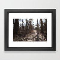 Afternon Light Framed Art Print
