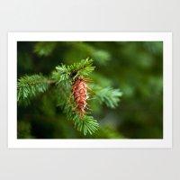 Spikey Pine Cone Art Print