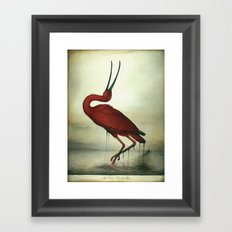 Oiled Scarlet Ibis Framed Art Print