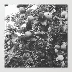 monochrome apples Canvas Print
