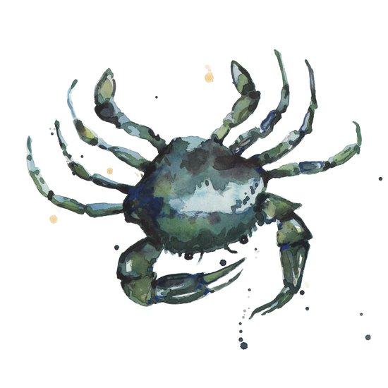Crab, nautical art, seashore creatures, crab watercolor, natural crab painting, crab pillows,  Canvas Print