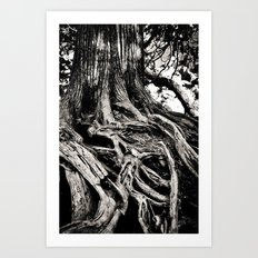 Beauty in the old Art Print