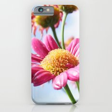 Pink Daisy Flowers iPhone 6 Slim Case