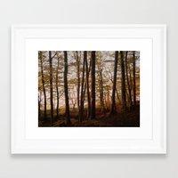 Autumn In The Woods 2 Framed Art Print