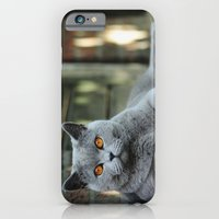 iPhone Cases featuring Diesel the cat ! by teddynash