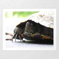 turtle 2016 Art Print