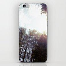 trees* iPhone & iPod Skin
