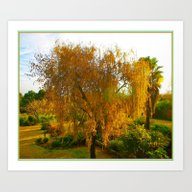 Our Golden Willow Art Print