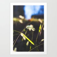 Back Lit Art Print