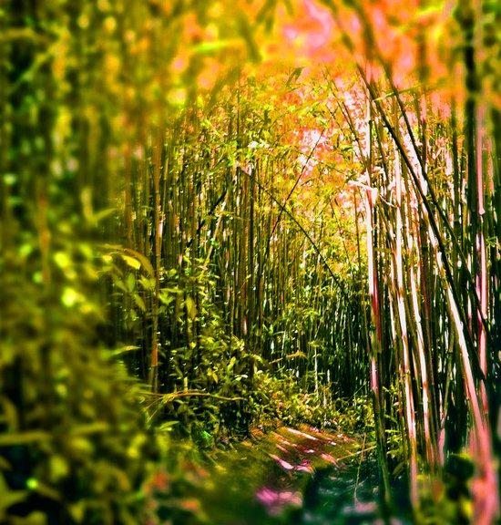 bamboo tunnel Art Print