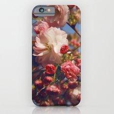 Blossoms in Beijing iPhone 6 Slim Case