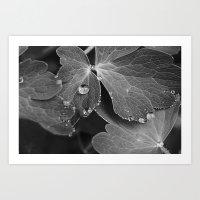 Black & White Spring  Art Print