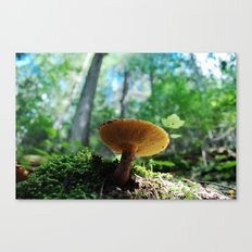 forest floor Canvas Print