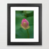 Lotus Blossom Flower 17 Framed Art Print
