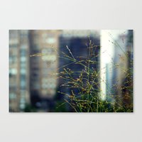 Wisps Of Weeds In The Ci… Canvas Print