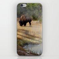 Buffalo at Thermal Pool iPhone & iPod Skin