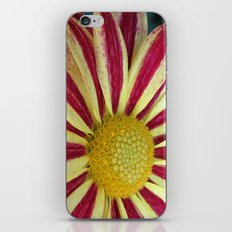 The Striped Dress iPhone & iPod Skin