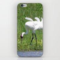 Whooping Crane iPhone & iPod Skin