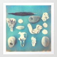 Beachcomber's collection Art Print