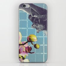 Brunch iPhone & iPod Skin