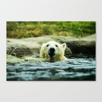 Young Pole Bear Swimming Canvas Print