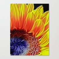 Sunflower Head Canvas Print