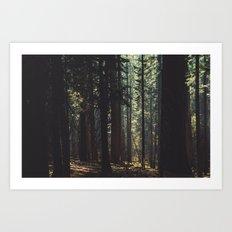 Into the wood Art Print