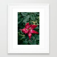 Fragile Pink. Framed Art Print