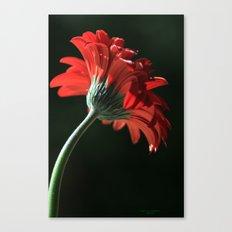 The Red Sun Dancer Canvas Print