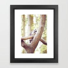 waschbaer  Framed Art Print