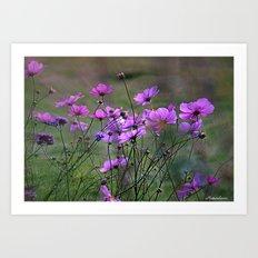 Purple Windflowers Art Print