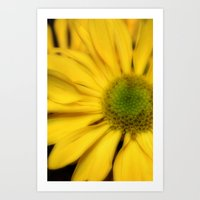 sunflowers2 Art Print
