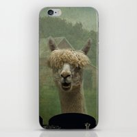 Alpaca Farm iPhone & iPod Skin