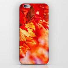 Indian Summer 7 iPhone & iPod Skin
