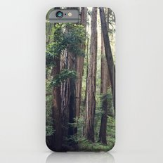 The Redwoods at Muir Woods iPhone 6 Slim Case