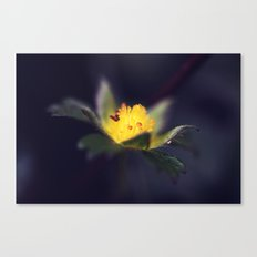Strawberry Blooms in December Canvas Print