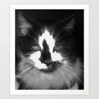Blott - Kitty Cat II Art Print
