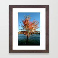 Autumn Tree Framed Art Print