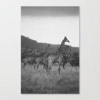 Kaleidoscope Of Giraffes Canvas Print