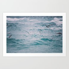 just us gulls - seagull photography Art Print