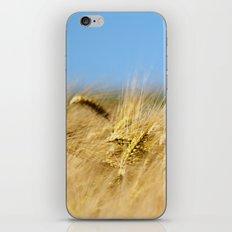 Blue & Gold iPhone & iPod Skin