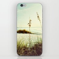 Beach Grass iPhone & iPod Skin