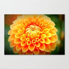 In Bloom! Canvas Print