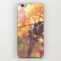 Fall Grapes iPhone & iPod Skin