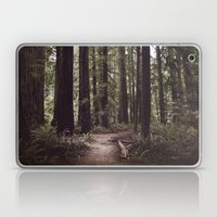 Redwood Forest Laptop & iPad Skin