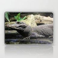 Crocodile Laptop & iPad Skin