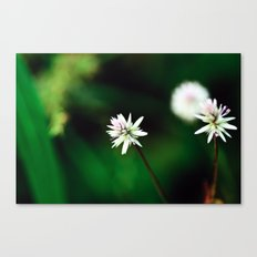 Near & Far Canvas Print